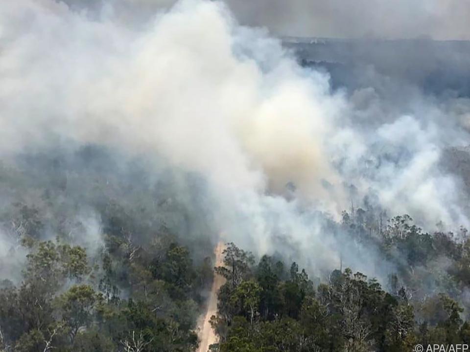 In Australien brennen die Wälder