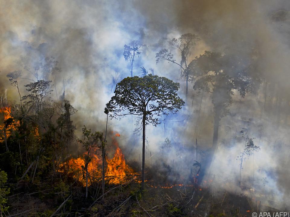 Zahl der Brände im Amazonaswald mehr als verdoppelt gegenüber Oktober 2019