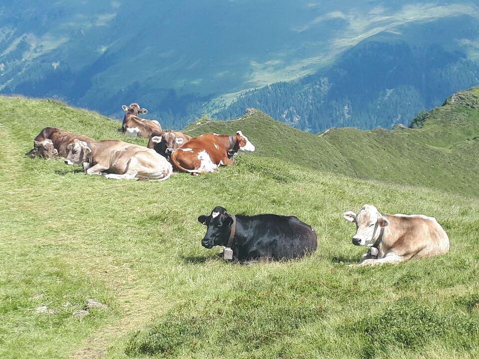 1091675_Viehbesatz Kuh