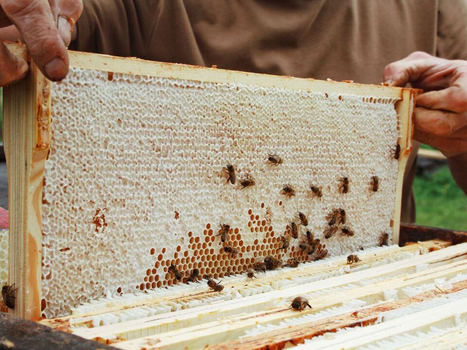 Honig Bienen Imker