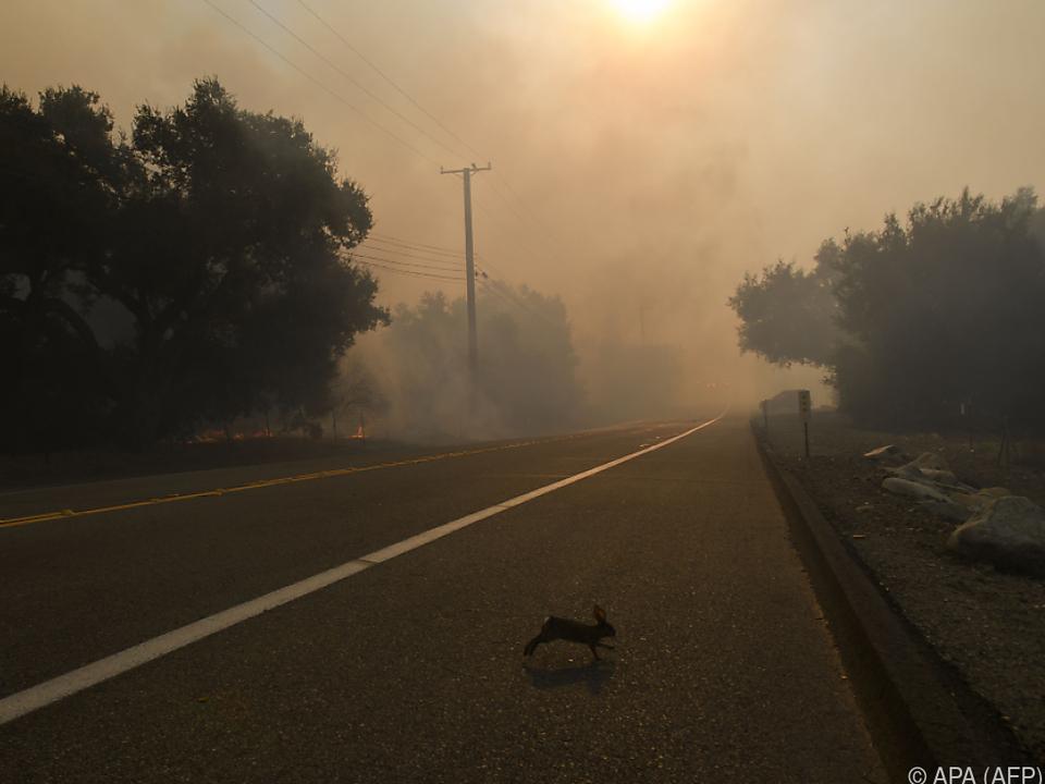 Auch Tiere fliehen vor den Flammen