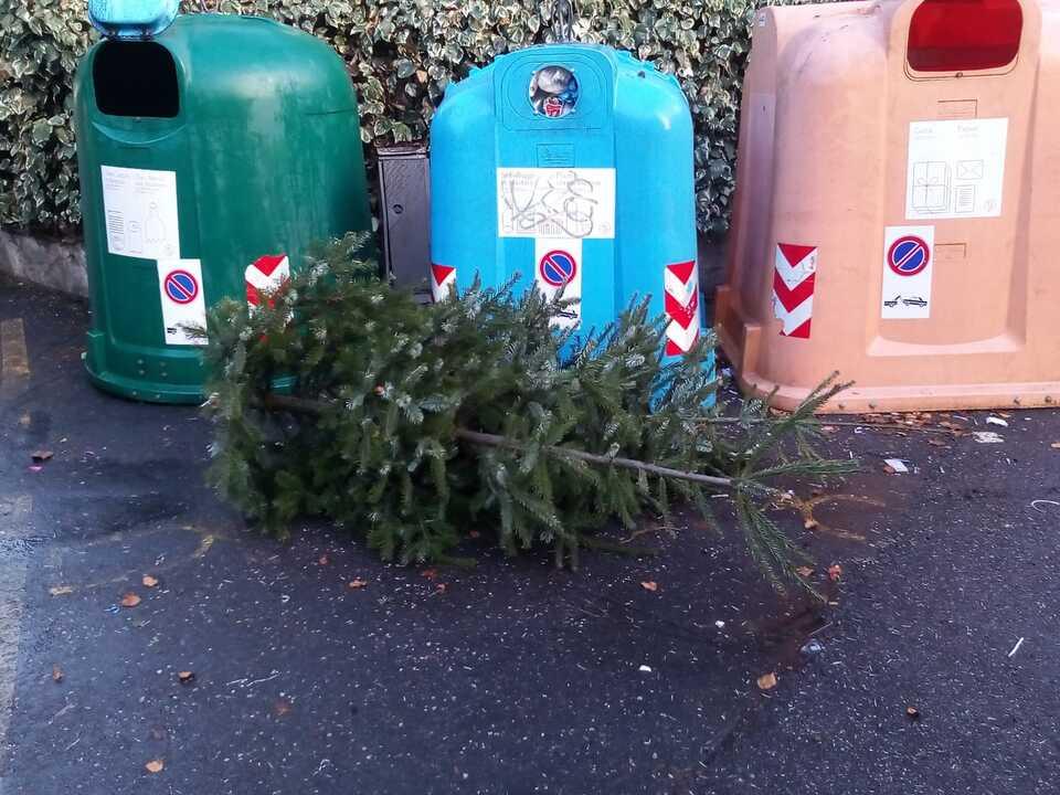 raccolta alberi_8