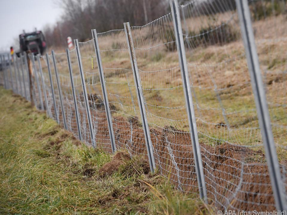 So könnte der Grenzschutzzaun aussehen schweinepest