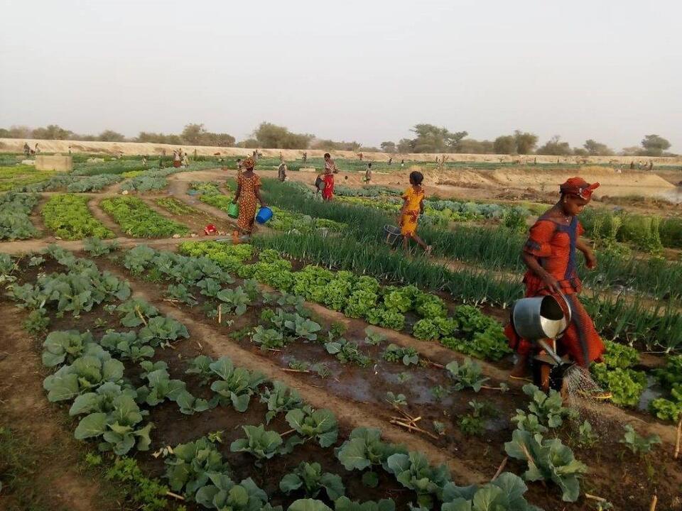 1095962_20210126_LReg_EZA_Burkina-Faso