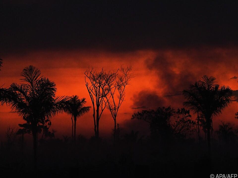 43 Millionen Hektar Wald verschwanden seit 2004