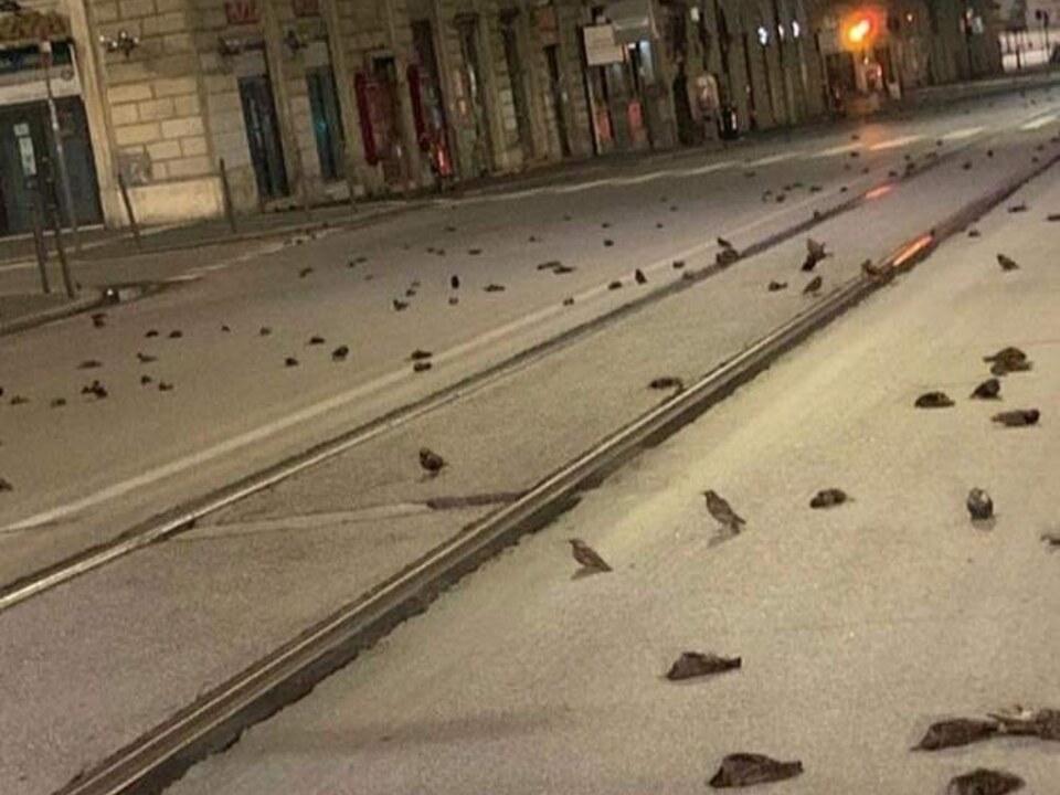 Vogelsterben in Rom