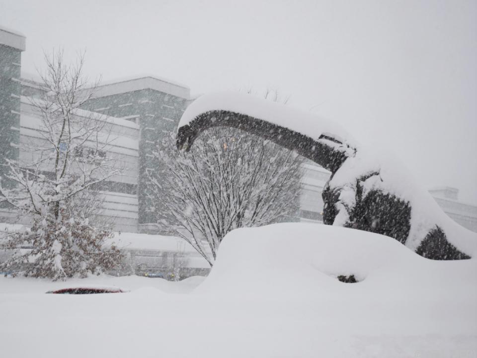 Schneebedeckte Dinosaurierstatue in Fukui