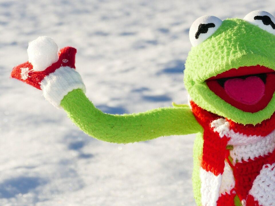 Kermit Schneeballschalcht