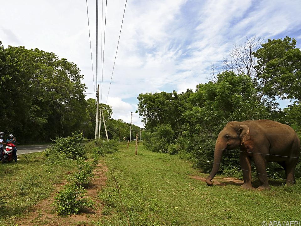 Sri Lanka lässt wieder Touristen ins Land