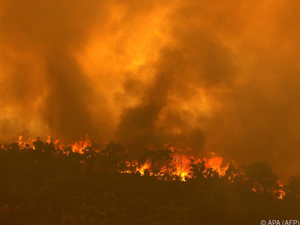 Mehr als 300 Feuerwehrleute kämpften gegen Flammen