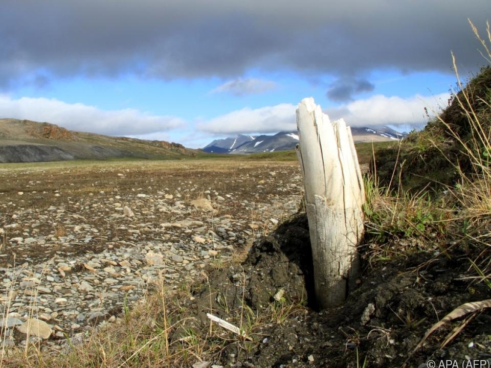 Permafrost gab Überreste wegen Klimawandel frei