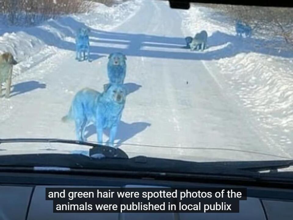 yt-blau-hund