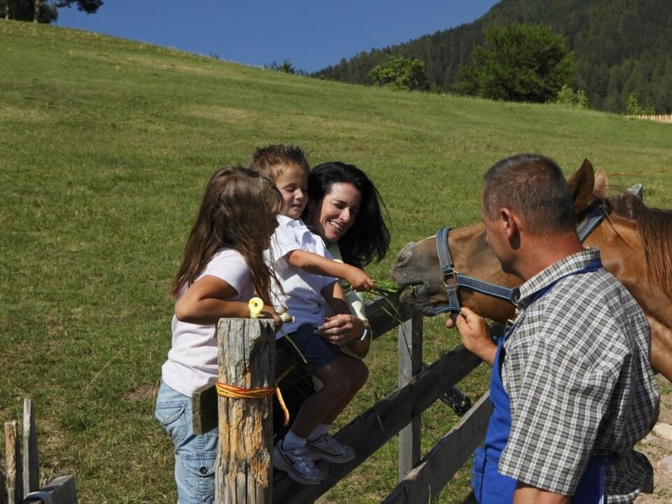 urlaub auf dem bauernhof Die Voraussetzungen, um Urlaub auf dem Bauernhof anbieten zu können, hat die Landesregierung heute in Bezug auf Pachverträge und Tierhaltung angepasst.1102107_UaB-302_MG_6147_8