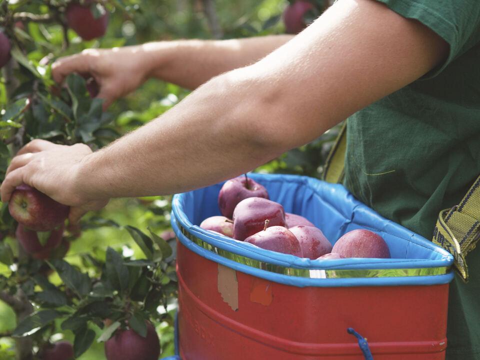 Die Landesregierung hat die Anpassungen zum Landesverzeichnis der landwirtschaftlichen Unternehmen genehmigt. (Foto: 1102366_Landwirtschaft_IDM_jepr