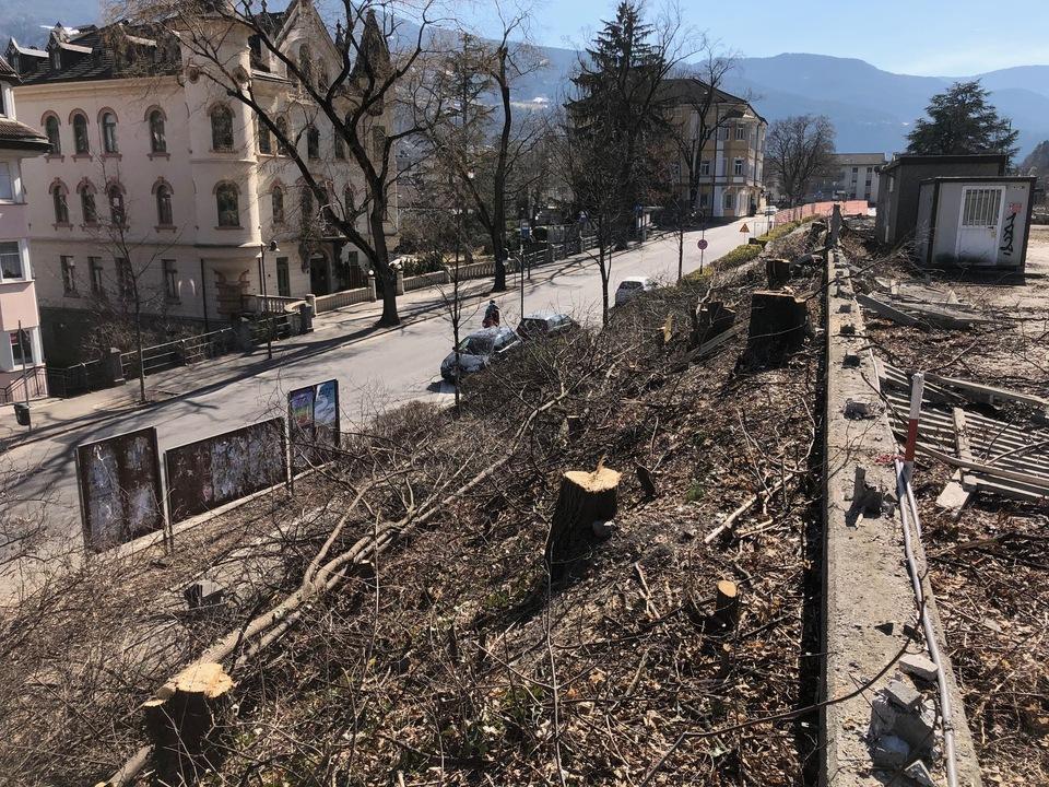 BäumeGefälltBahnhofstraßeSüden