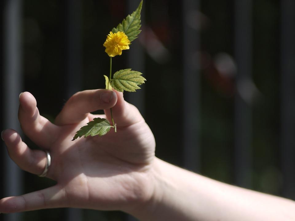 Blume Hand spende