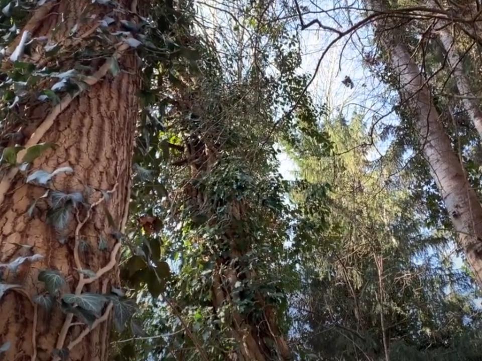 aufwald brixen