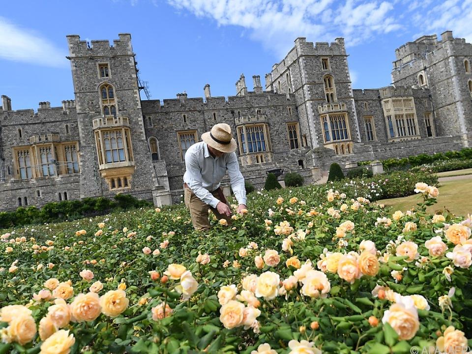 Rosen aus dem East Terrace Garden dienten als Vorlage
