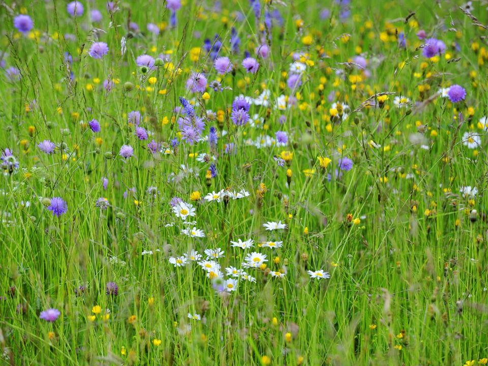 Blumenwiese insekten artenvielfalt biodiversität