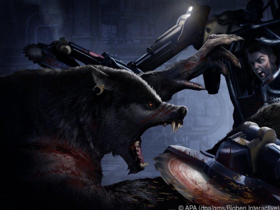 Wolf gegen Maschine - wer hier wohl gewinnt?