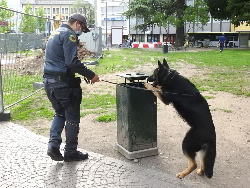 Drogenhund Finanzpolizei