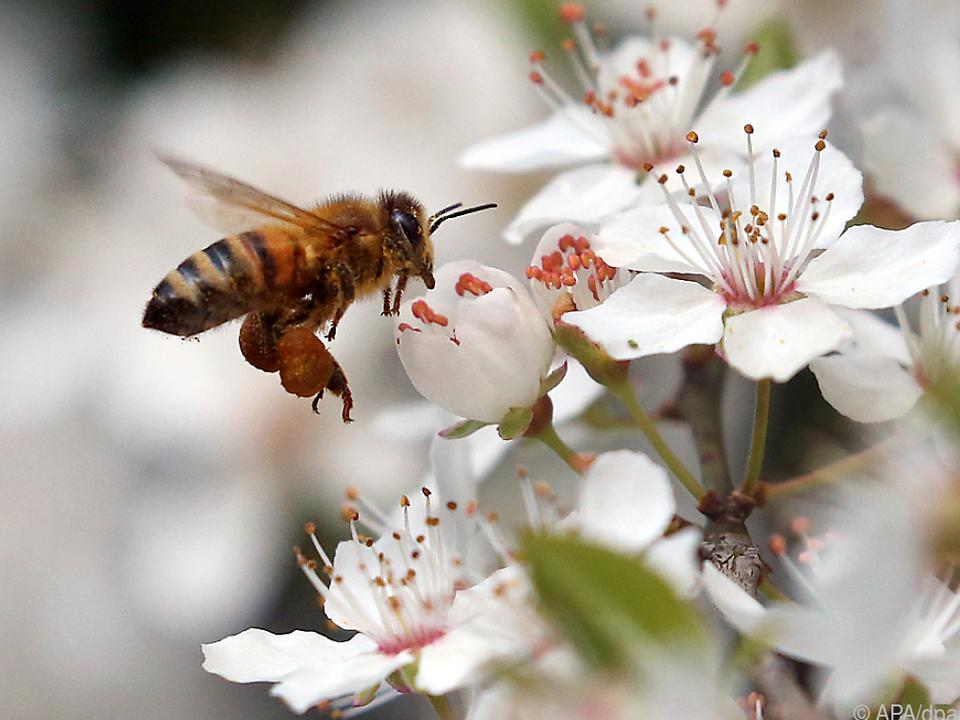 Fleißig wie die Biene - aber im richtigen Job?
