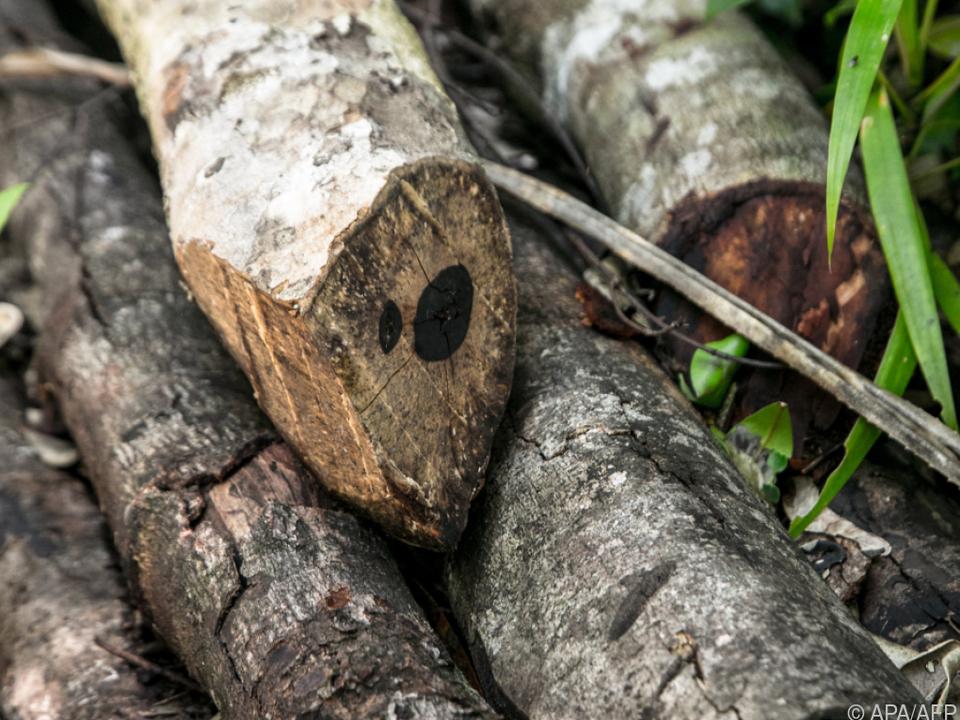 Handel von Soja, Kaffee, Holz und Rindfleisch setzt Regenwald zu