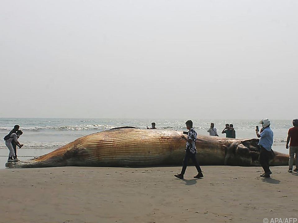 Toter Wal am Strand von Cox\'s Bazar
