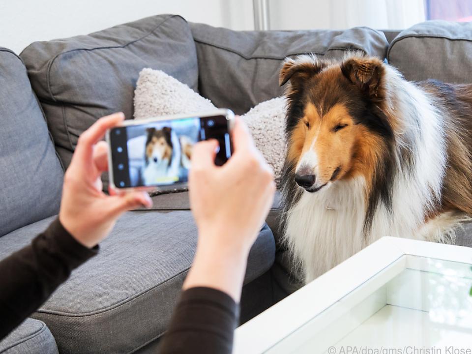 Wer seinen Hund perfekt in Szene setzen will, sollte einiges beachten