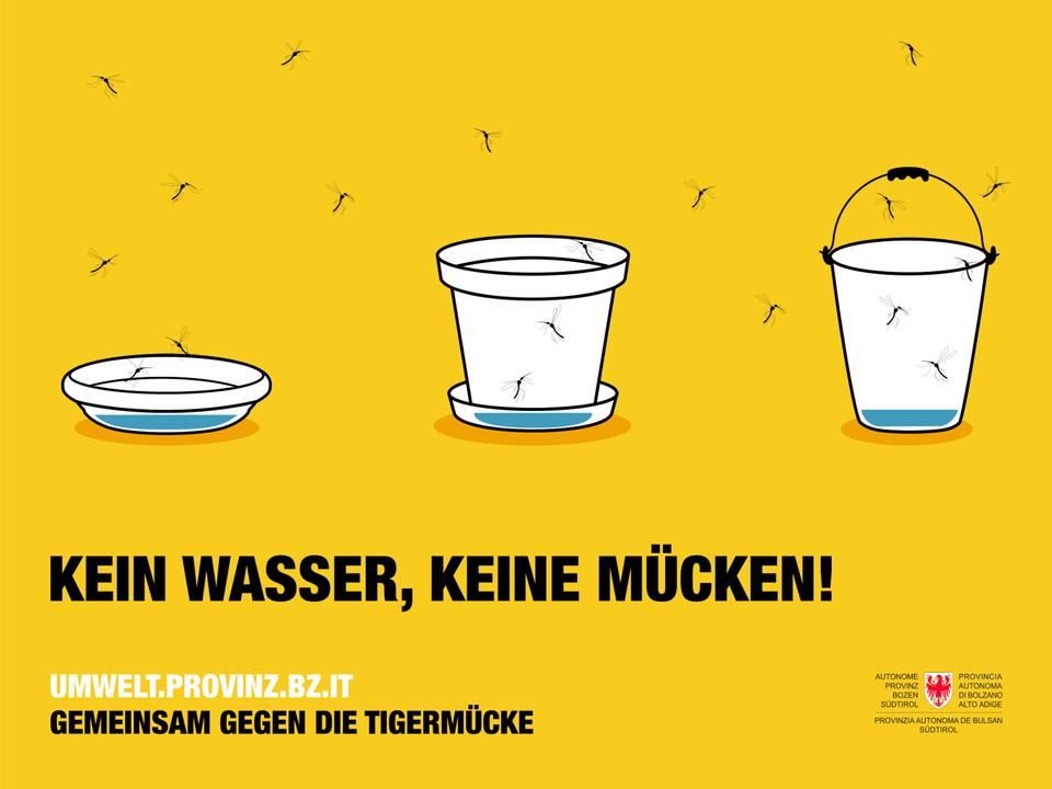 Tigermücke 1107718_Tigerm_cke_Kampagne-KEIN-WASSER-KEINE-M_CKEN