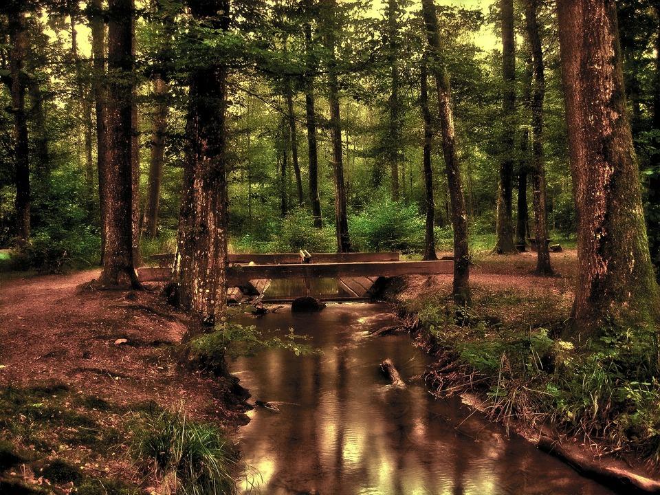 Kneipp Wald