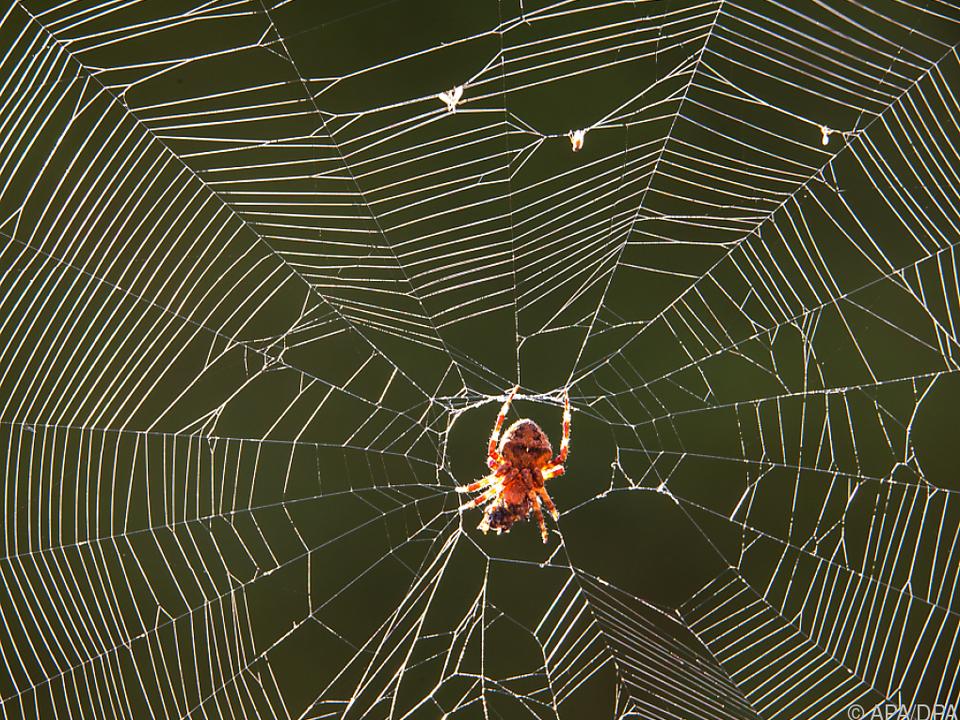 Das Netz einer Spinne an der Alarmanlage löste diese aus