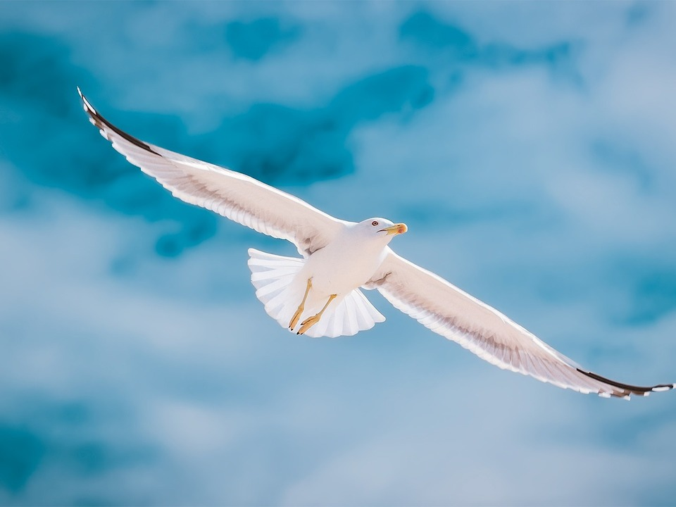 seagull-2444497_1920 möwe vogel