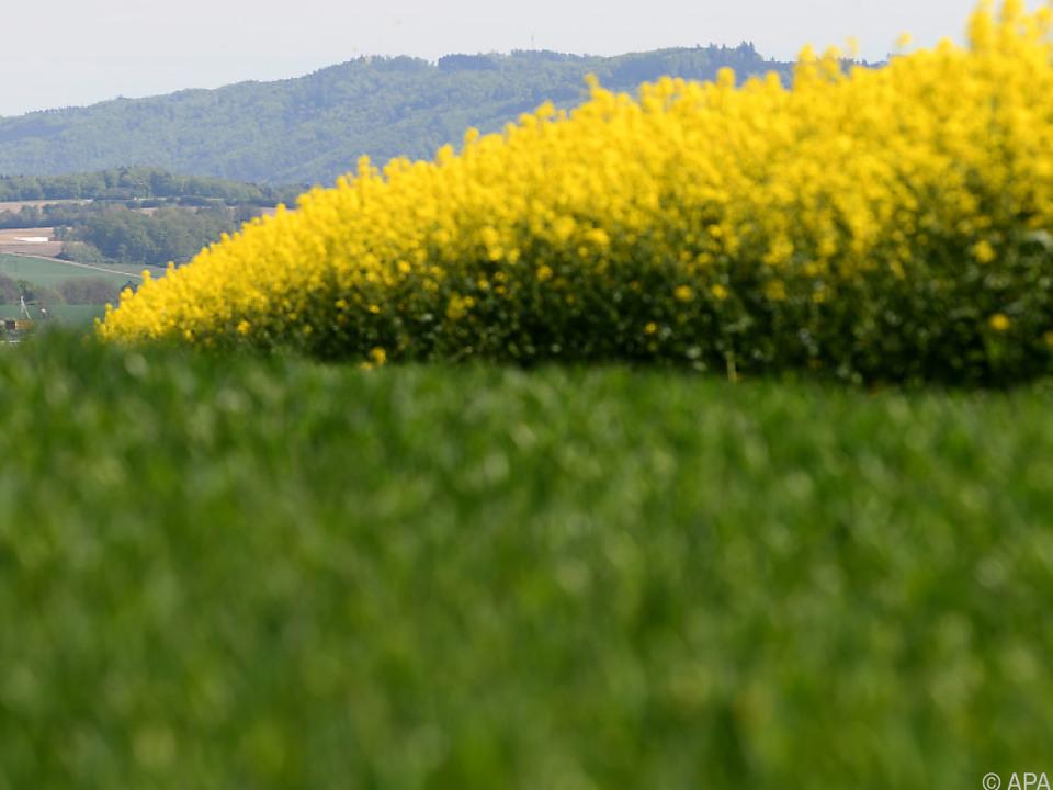 Via EU-Agrarpolitik werden Milliarden an Fördergeldern vergeben.