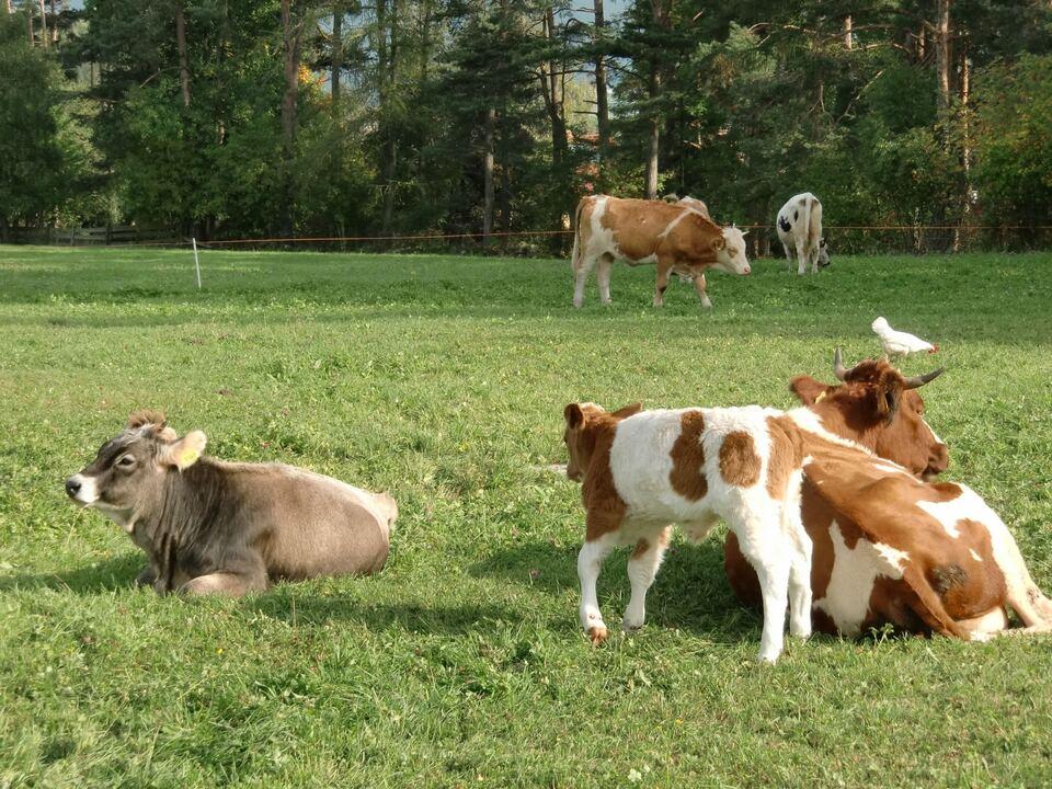 Alle Sektoren der Landwirtschaft - im Bild Viehhaltung - setzen sich mit Strategien der Nachhaltigkeit auseinander. LR Schuler: \