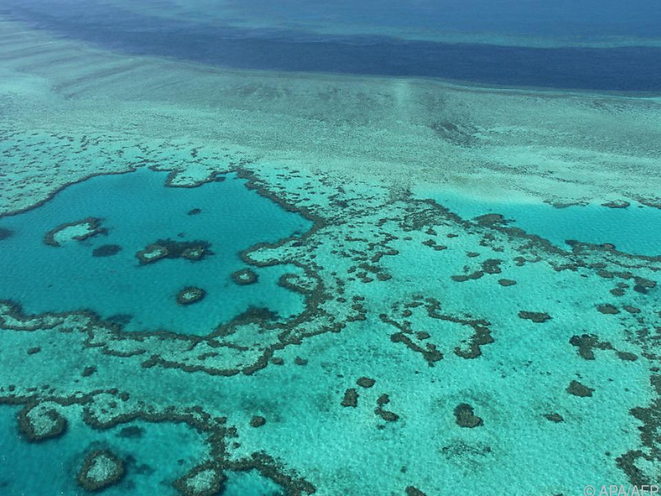 Beschädigt, aber laut UNESCO nicht bedroht: Das Great Barrier Reef