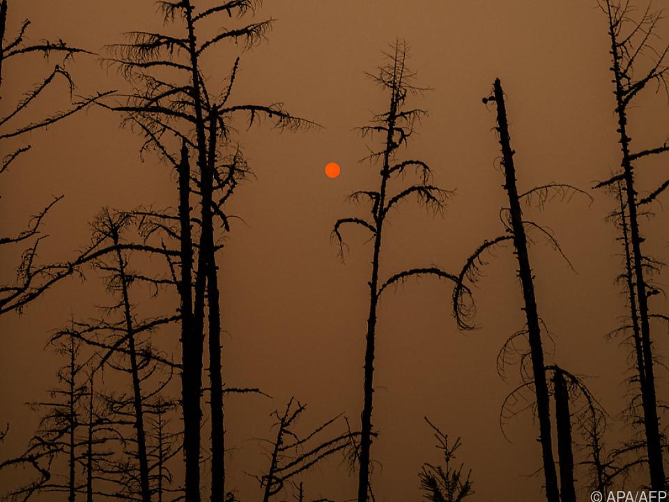 4,4 Millionen Hektar sind bereits Brandgebiet