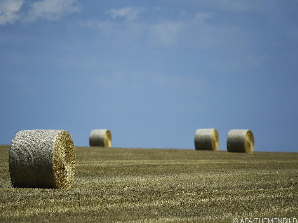 Heuballen auf einem abgeernteten Getreidefeld in Niederösterreich