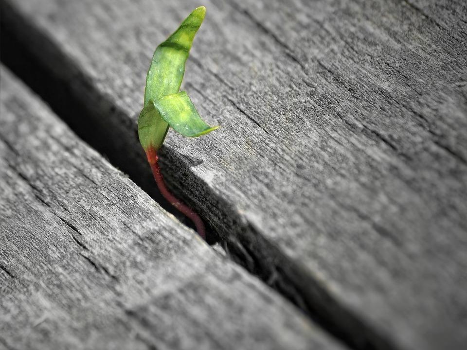 kleine Pflanze Holzboden Brett