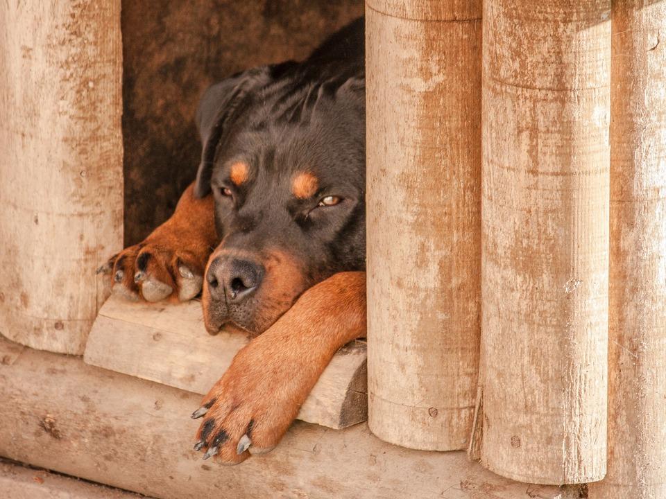 Hund Hundehütte rottweiler-1771878_1920