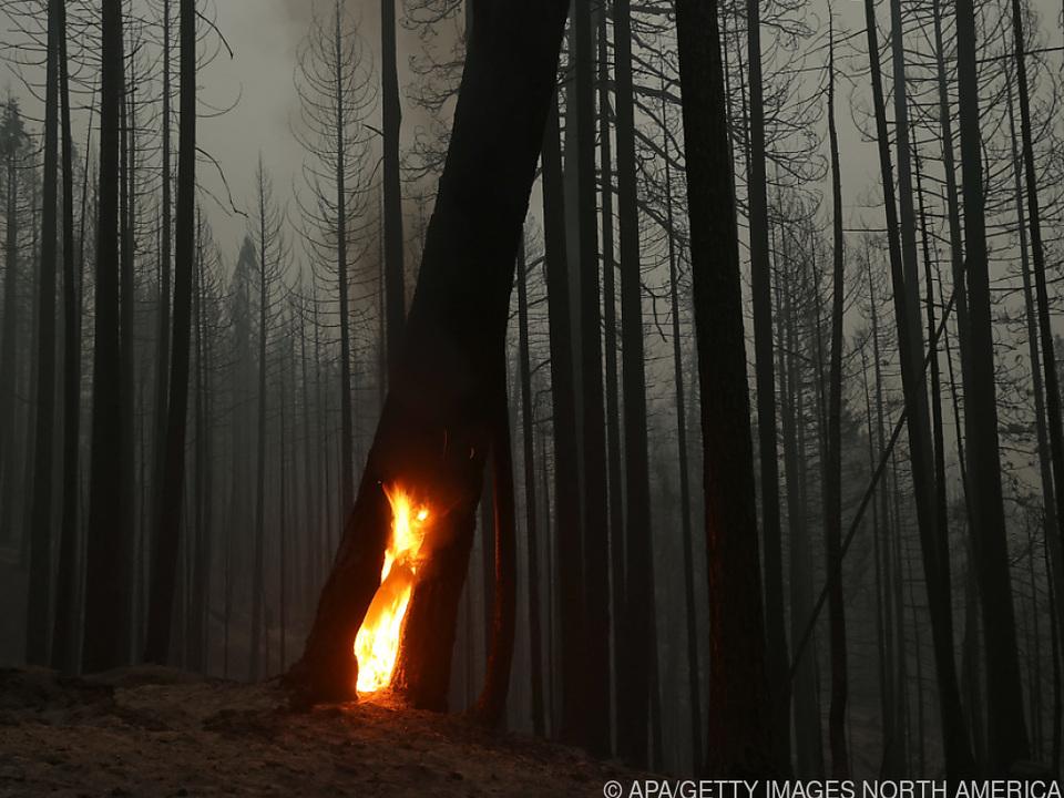 Teilweise Entspannung bei Bränden waldbrand feuer sym