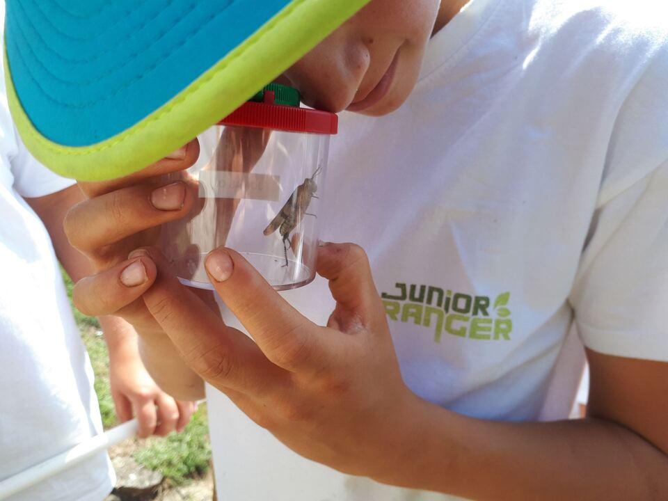 FOTO 8 Insekten Junior Ranger Texelgruppe (c) Ralf Pechlaner AVS (10)