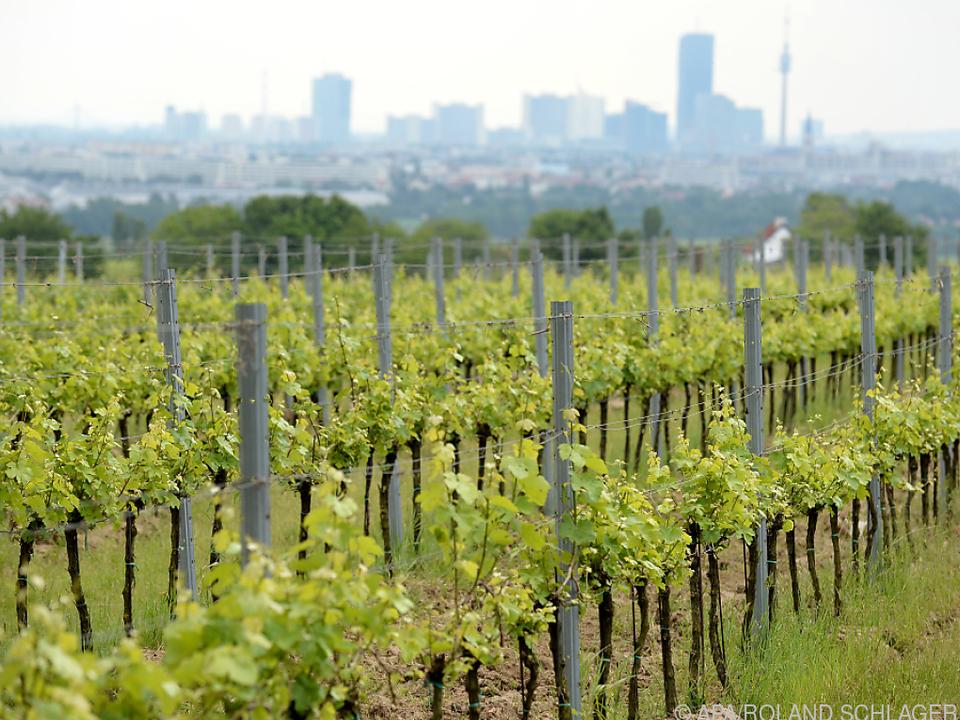 Heimischer Wein ist im Ausland gefragt