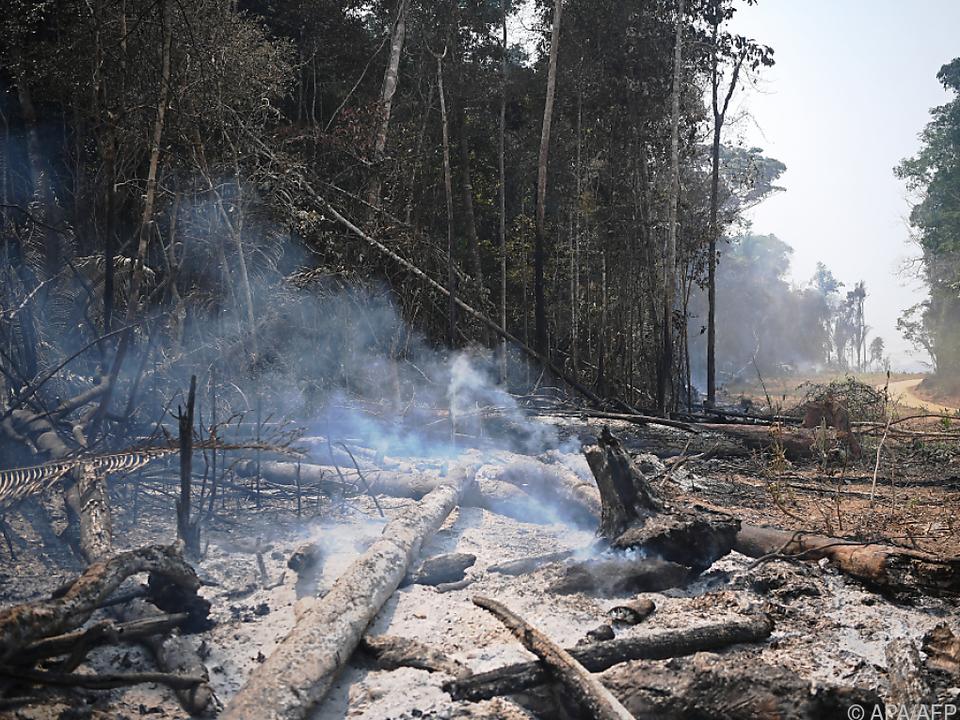 Immer mehr Wald muss Landwirtschaft weichen