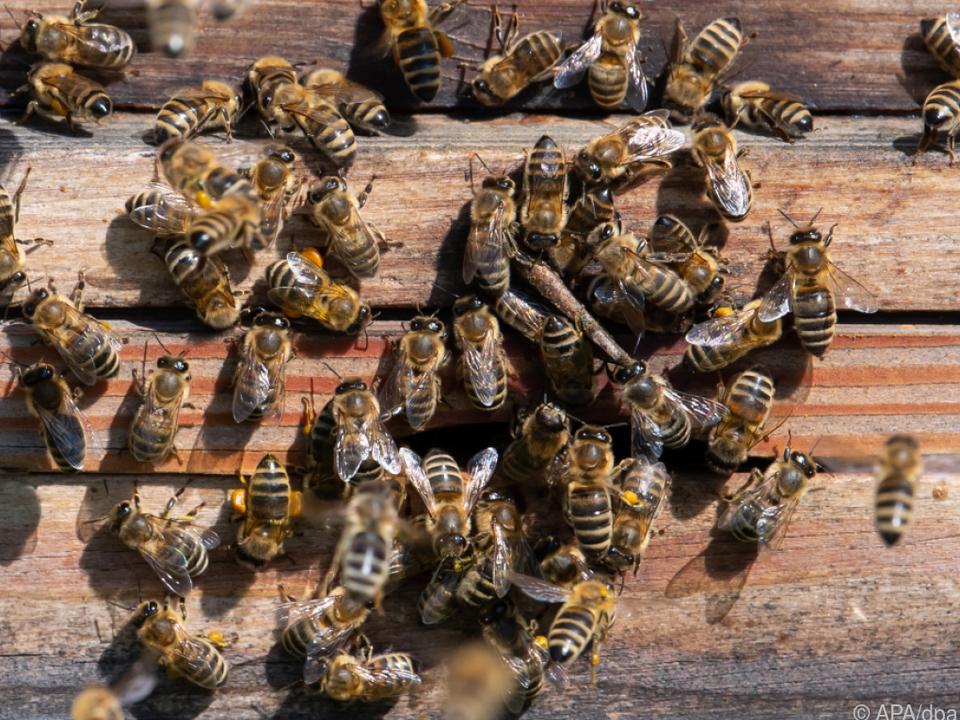 In vielen Bienenstöcken musste künstlich zugefüttert werden