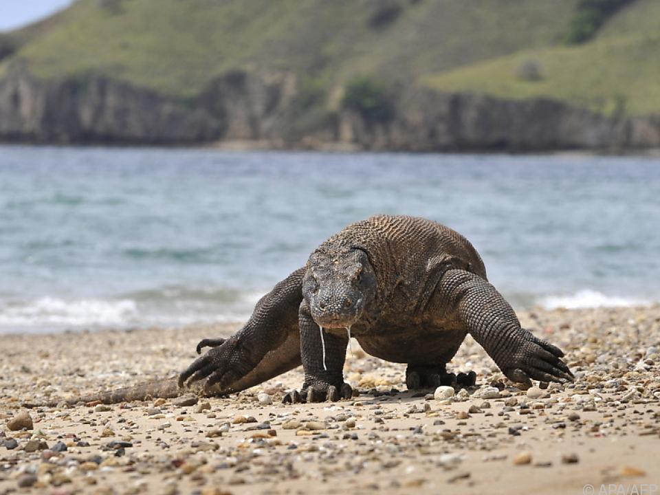 Weltnaturschutzunion IUCN tagt in Marseille