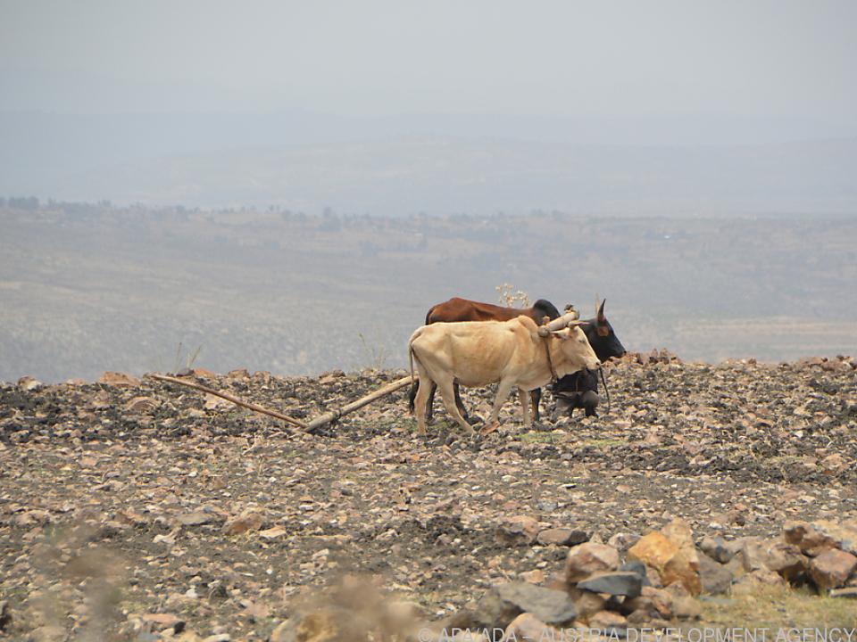 Landwirtschaft in Äthiopien