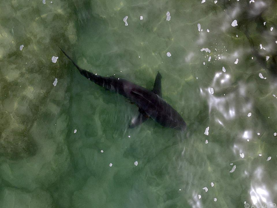 Sieben falsche Hai-Alarme sollen ausgelöst worden sein (Archivbild)